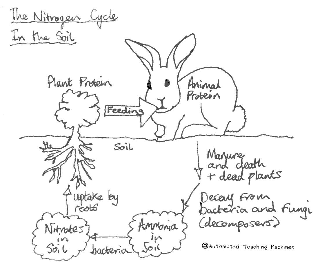The nitrogen cycle ccuart Gallery